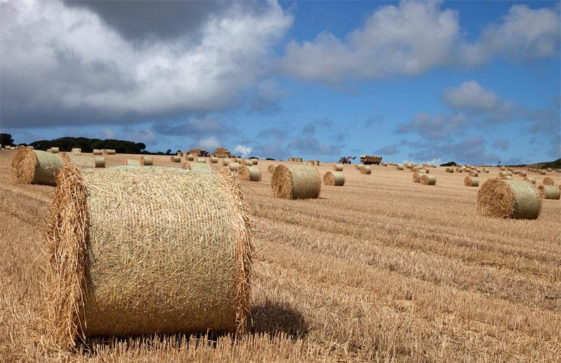 North Kerry Farmland