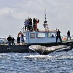 Blasket Island<br> Eco Marine Tours